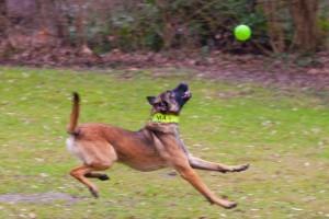 Yma beim Spielen mit Ball