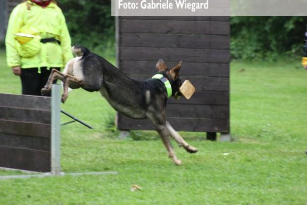 Max beim Apport über die Hürde (Foto: Gabriele Wiegard)
