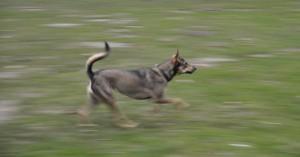 "Yuka beim ""Hunderennen"""