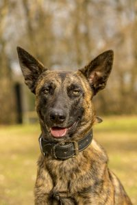 Toby (X-Herder) - Hundeführer: Konrad Oracz