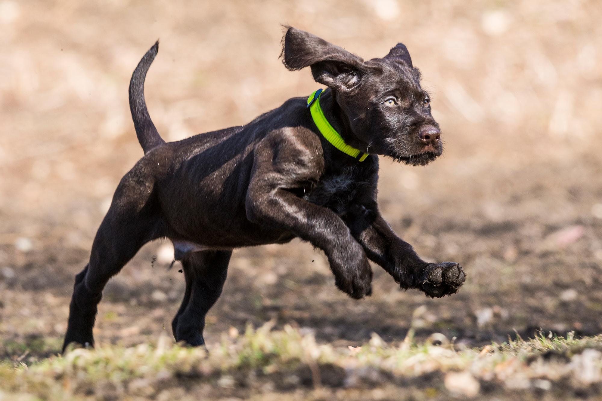 Rückruf mit Spaß – so funktioniert es bei jedem Hund!