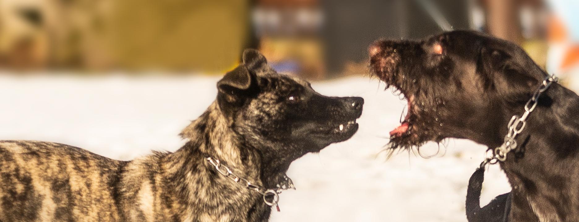 Seminar: Aggression und Kommunikation beim Hund