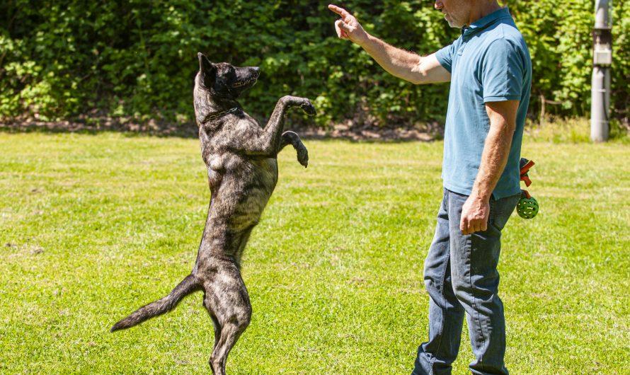 Der Trick mit dem Hund
